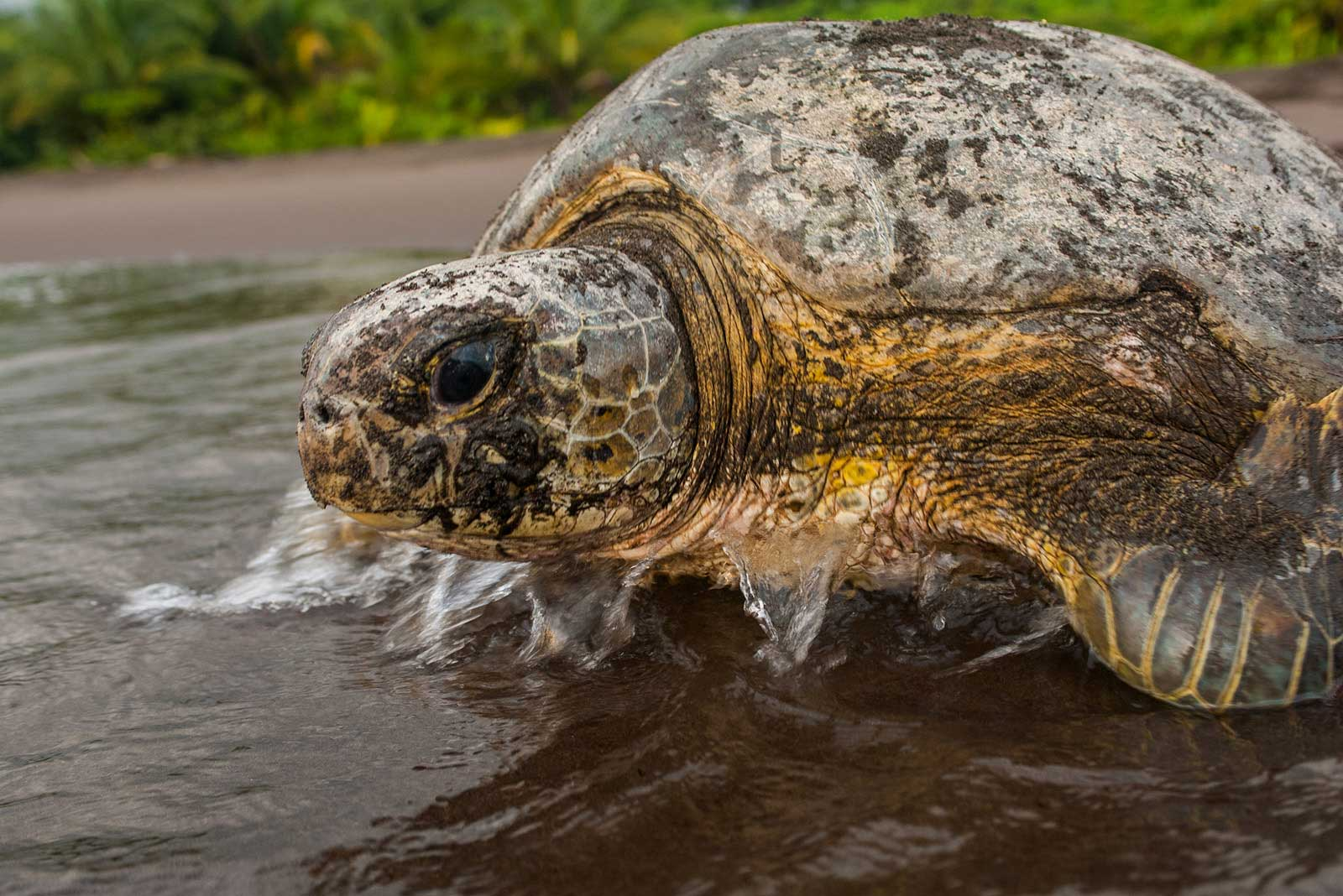 Protected: Tortuguero National Park - Costa Rica