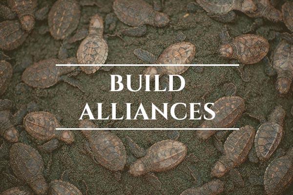 Unprotected: Sea Turtles - Global: Build Alliances