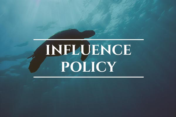 Unprotected: Sea Turtles - Global: Influence Policy