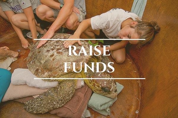 Unprotected: Sea Turtles - Global: Raise Funds