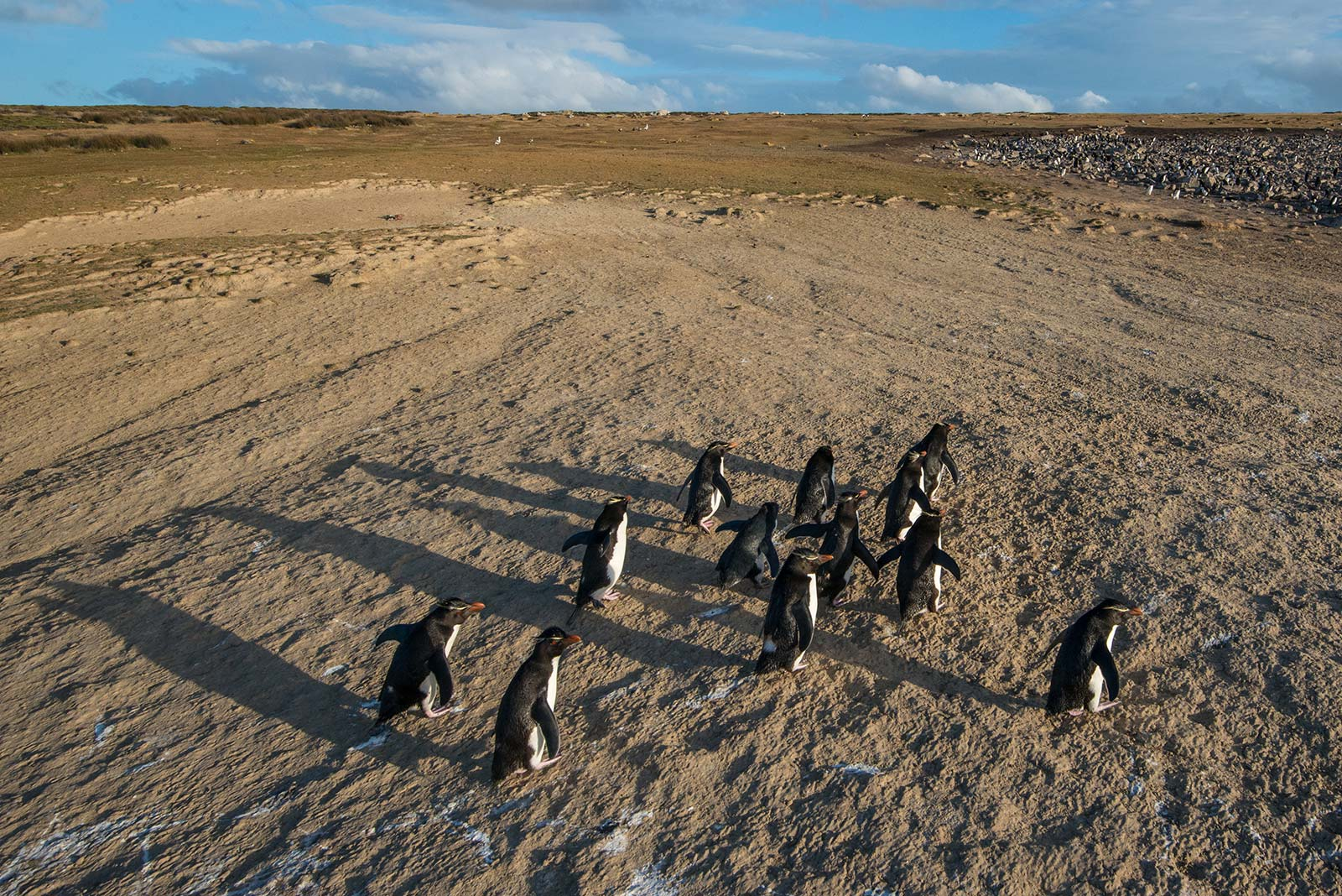 Unprotected: Rockhoppers - Falkland Islands/Islas Malvinas