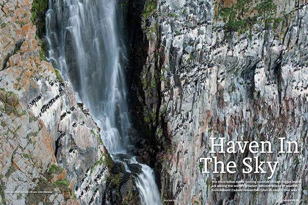 On Assignment: Canadian Wildlife Magazine - Haven in the Sky