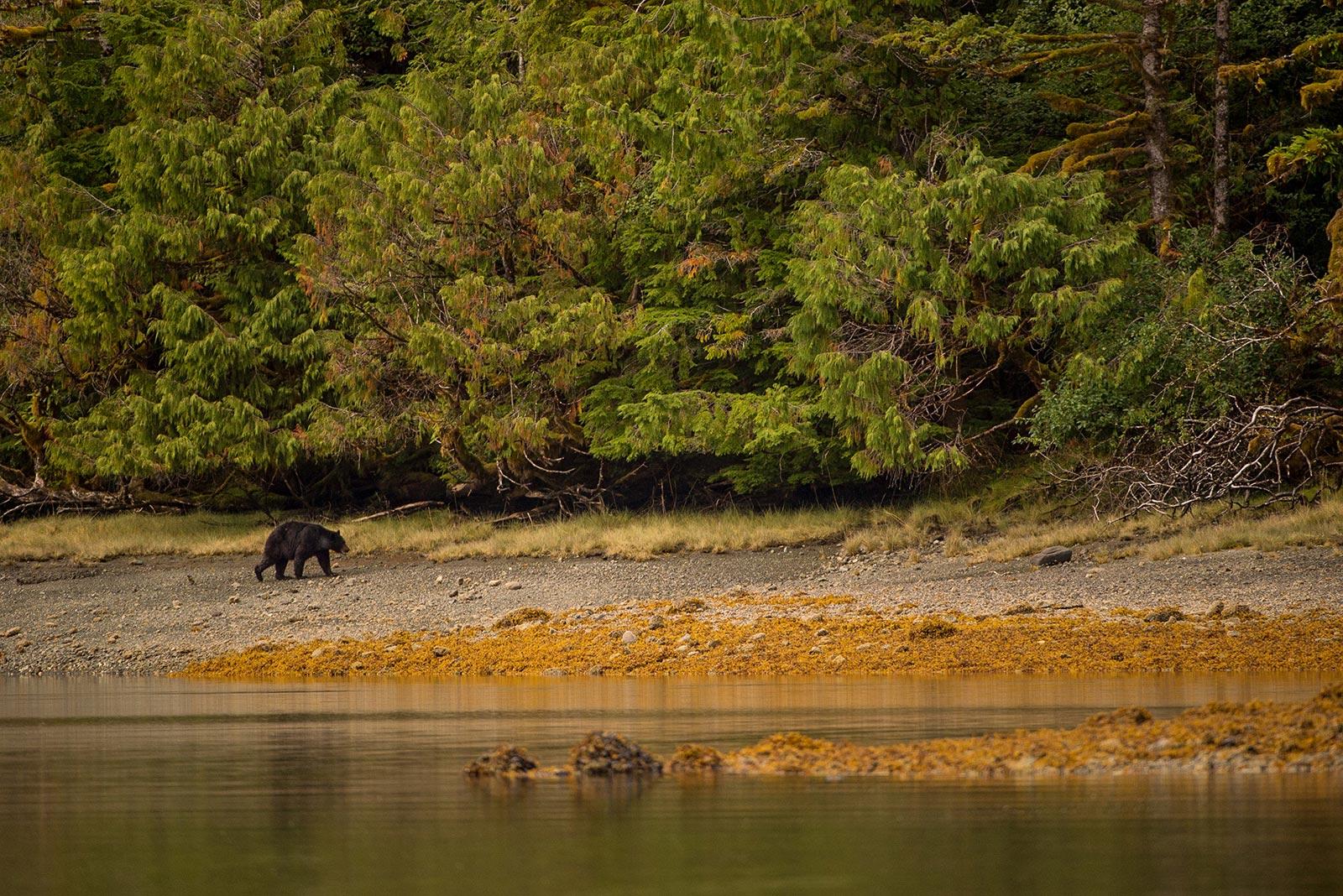 Stills: Portfolio - Wildlife