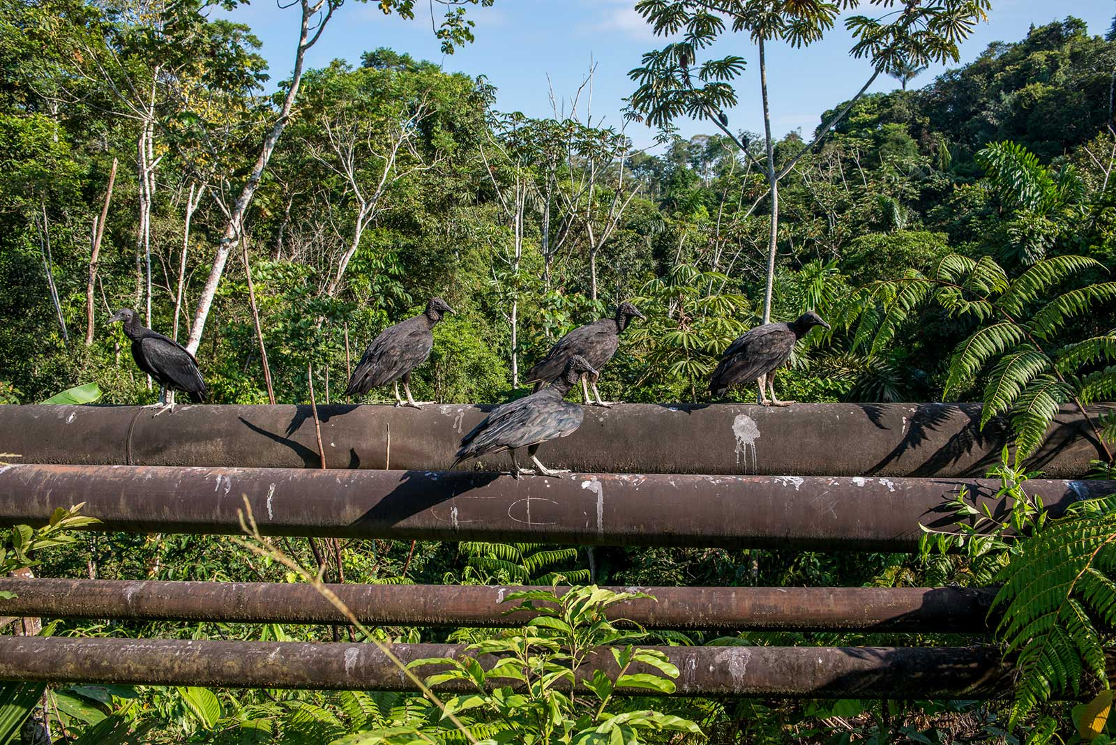 On Assignment: Audubon Magazine - Yasuni National Park