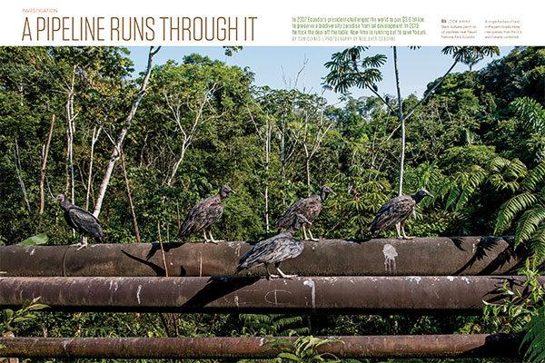 On Assignment: Audubon Magazine - Yasuni National Park
