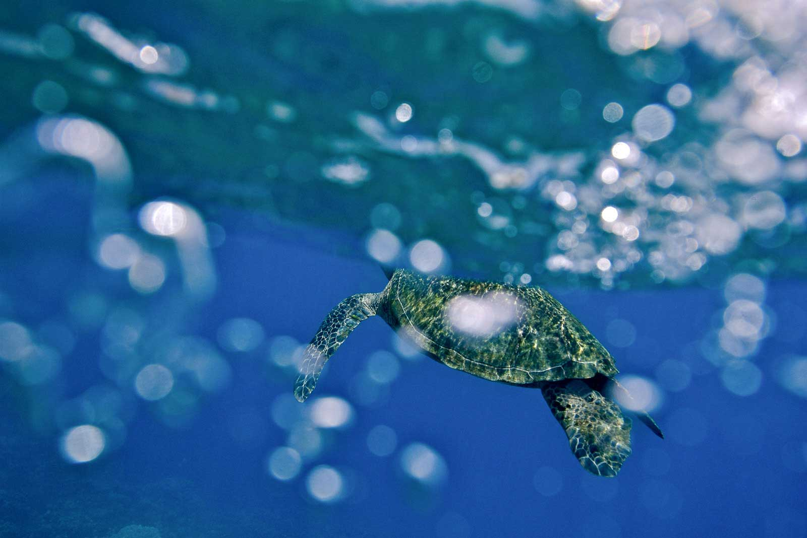 Unprotected: Sea Turtles - Global