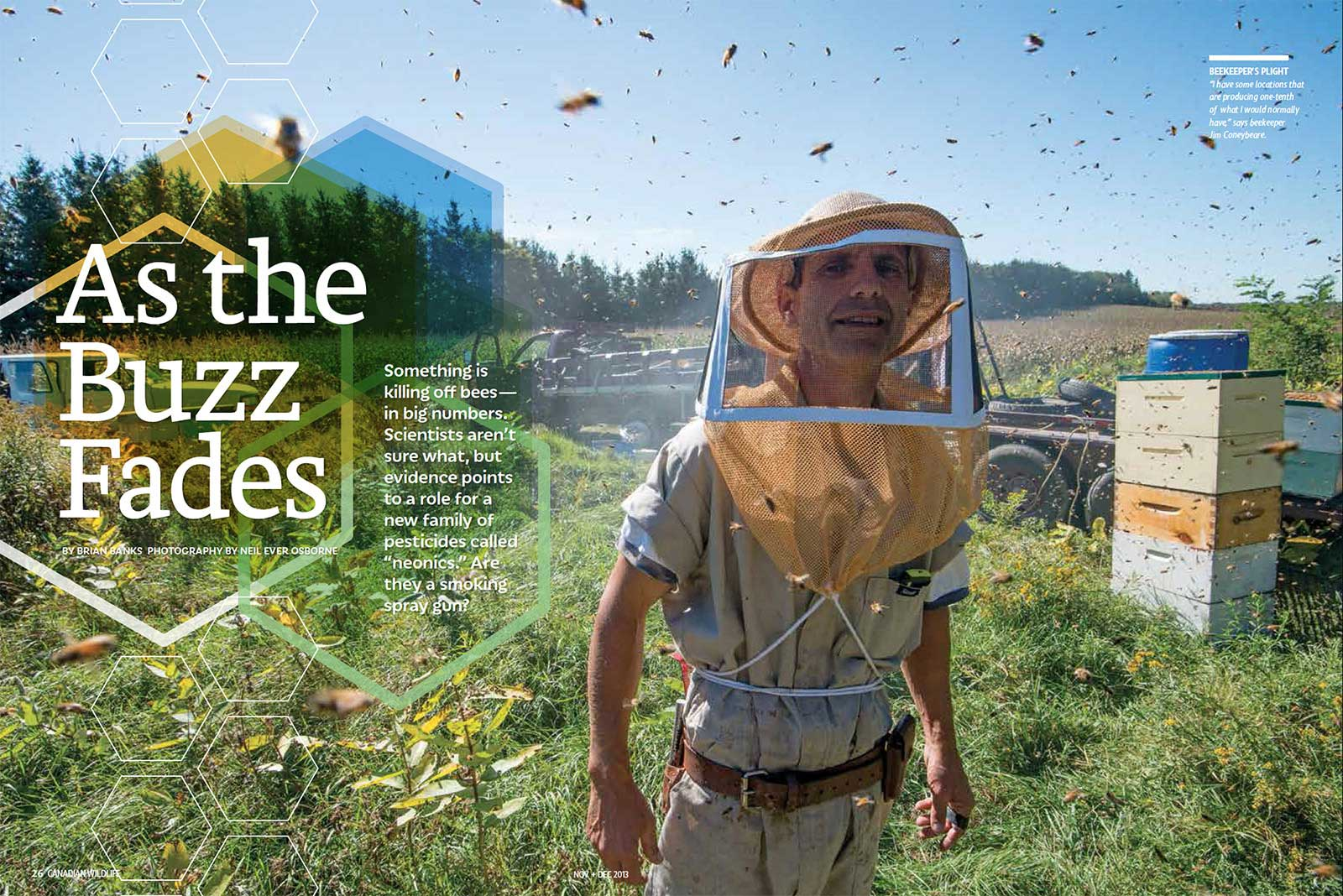 On Assignment: Canadian Wildlife Magazine: As the Buzz Fades