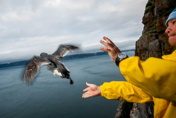 On Assignment: Canadian Wildlife Magazine: Haven in the Sky