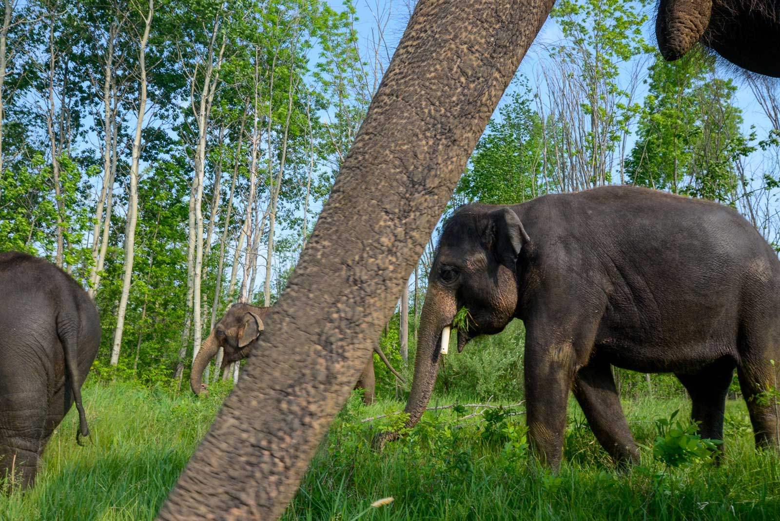 On Assignment: Canadian Wildlife Magazine: Welcome to the Jungle