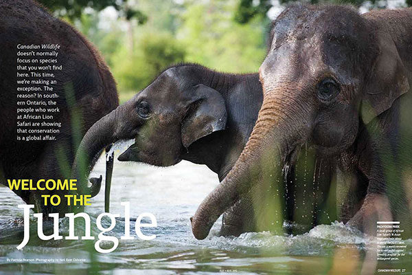 On Assignment: Canadian Wildlife Magazine - Welcome to the Jungle