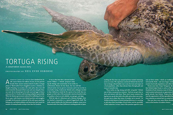 On Assignment: Orion Magazine - Tortuga Rising