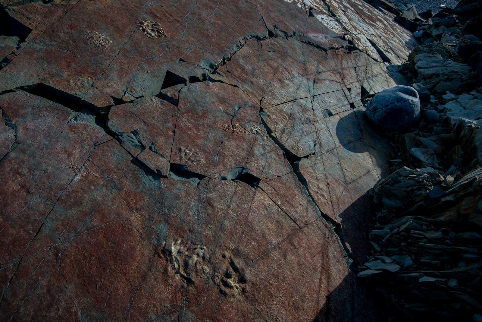 neo-fossils-6