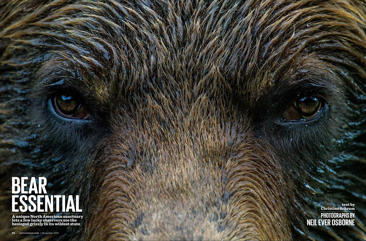Bear Essential with Smithsonian Magazine