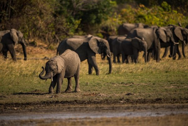 Home: An Elephant's Tale - Home in Kafue, Kafue National Park Zambia, Africa