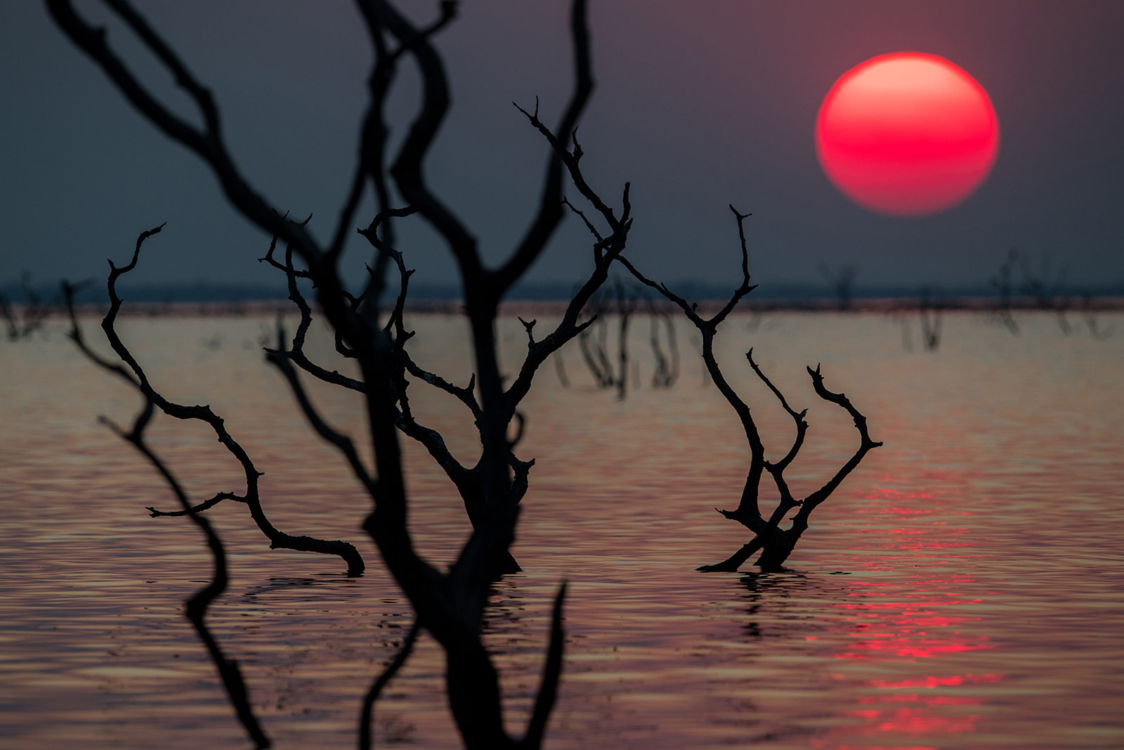 Home: The Photographs - Home in Kafue #2, Kafue National Park Zambia, Africa