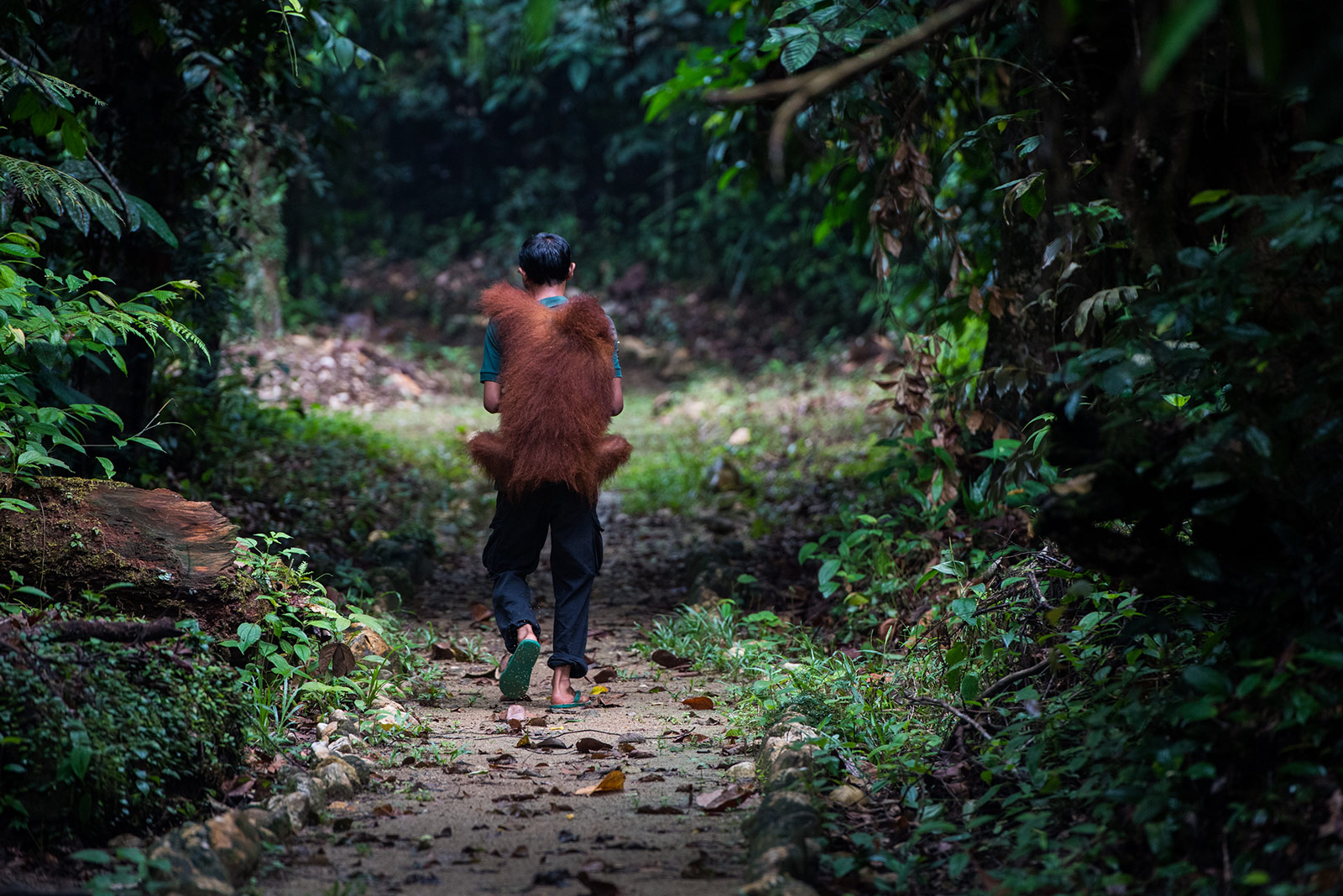Home: The Photographs - Shared Home, Bukit Tigapuluh National Park Sumatra, Indonesia