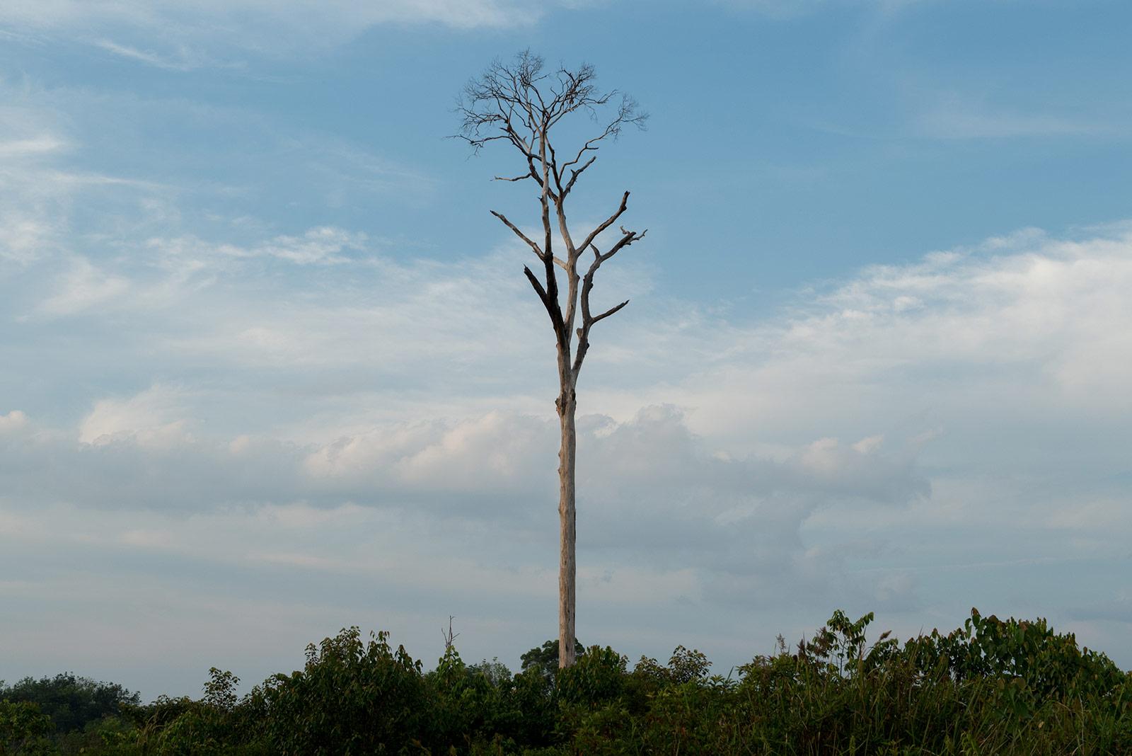 Home: The Photographs - Broken Home #2, near Bukit Tigapuluh National Park Sumatra, Indonesia